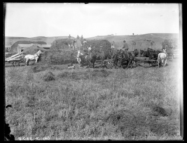 Threshing at the  George W. Butcher farm using  horse power, Custer County, Nebraska