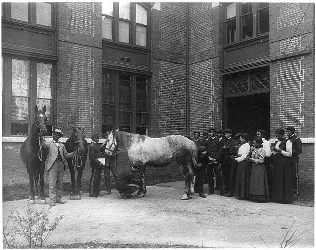 [African American students judging horses - Hampton Institute]