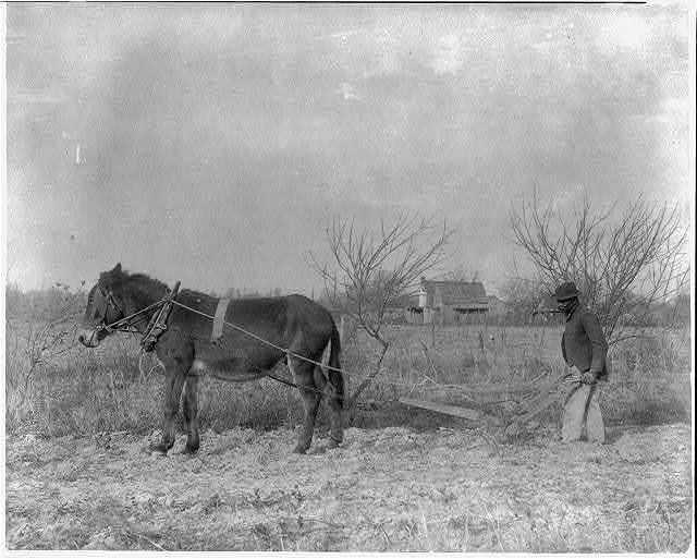 [American Indian and African American students at Hampton Institute, Hampton, Va. 1900(?) - man behind horse-drawn plow]