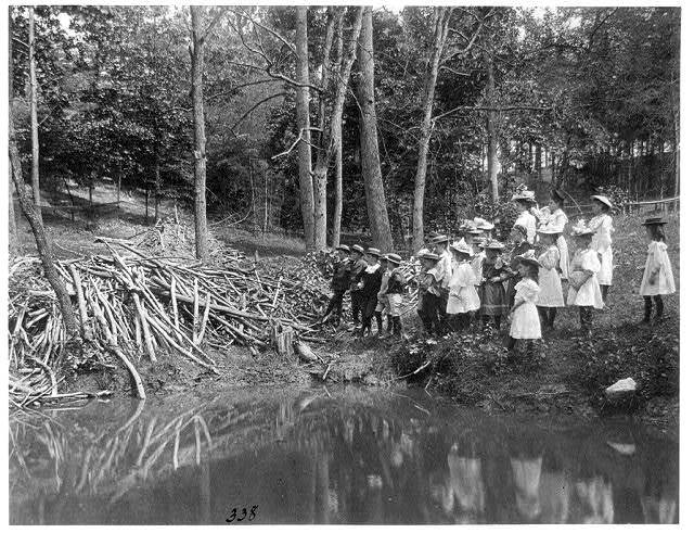 [Group of public school children looking at beaver dam in the National Zoo(?), Washington, D.C.]