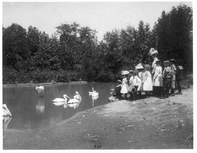 [Group of public school children looking at pelicans and swan in the National Zoo(?), Washington, D.C.]