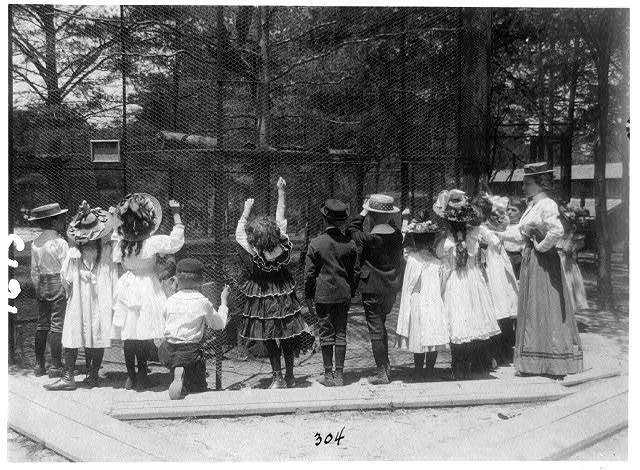 [Group of public school children offering peanuts to animals in the National Zoo(?), Washington, D.C.]