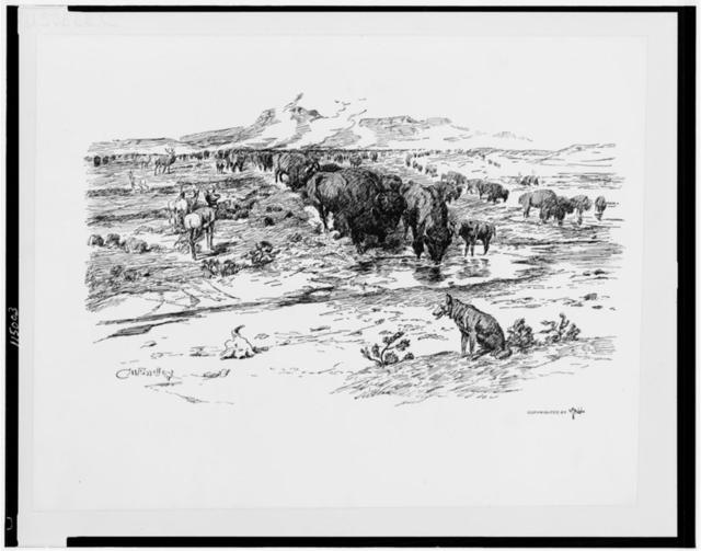 Nature's cattle / C.M. Russell.