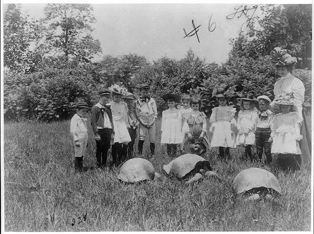 [School children and three terrapin, Washington, D.C.]