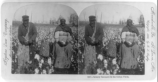 Seventy summers in the cotton fields