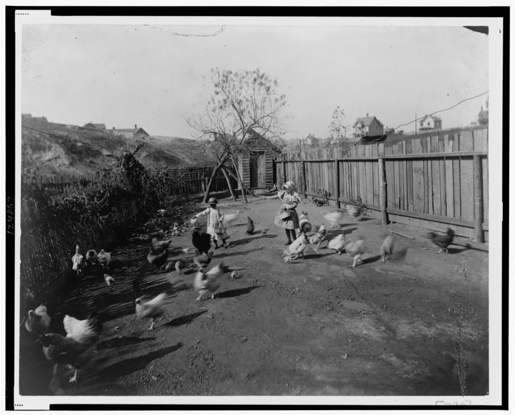[Two African American children feeding chickens in a fenced-in yard]