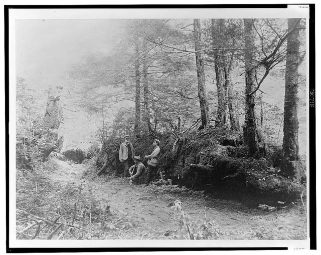 [D.G. Elliot, A.K. Fisher, and Robert Ridgway in woods bordering Indian River, Sitka, Alaska, 1899] / Curtis.