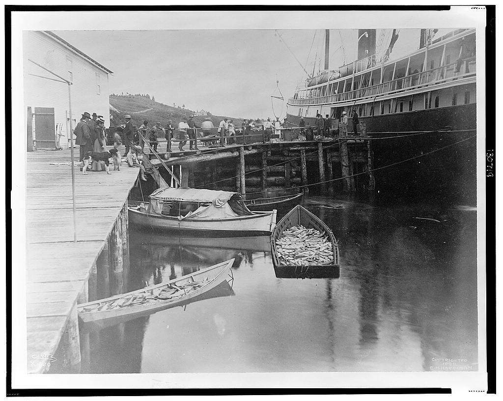 [The expedition vessel, George W. Elder, at dock possibly in Sitka, Alaska, and two small boats loaded with fish in the foreground, 1899] / Curtis.