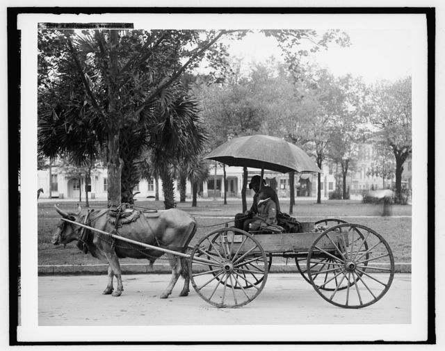 A Bovinmobile, Savannah, Ga.