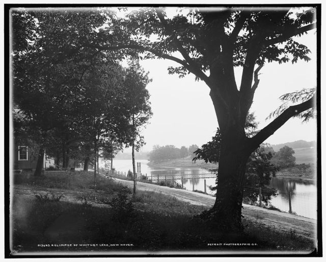A Glimpse of Whitney Lake, New Haven