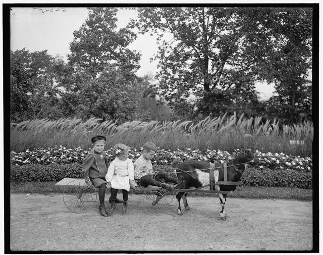 [A Goat team, Highland Park, Rochester, N.Y.]