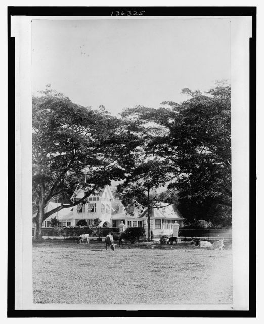 [A House in Port of Spain, Trinidad and Tobago; in foreground, cattle grazing on a green]