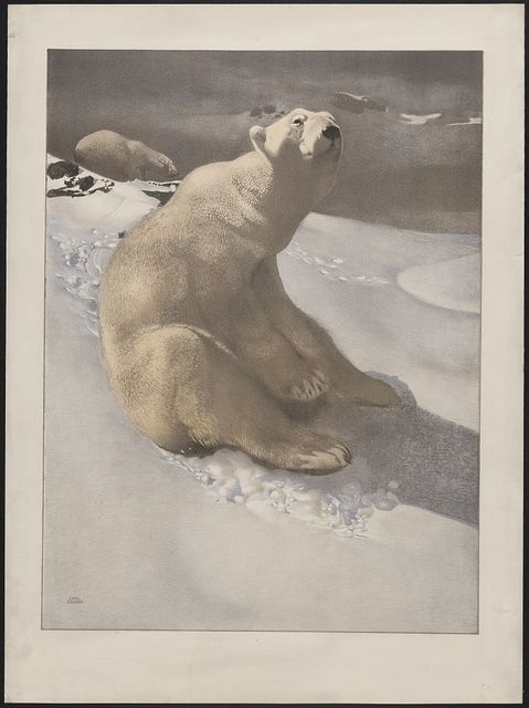 [A polar bear seated on snow and another polar bear walking in background] / Carl Ederer.