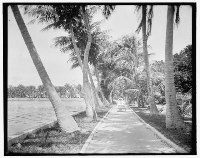 [Along the shore of Lake Worth, Palm Beach, Fla.]