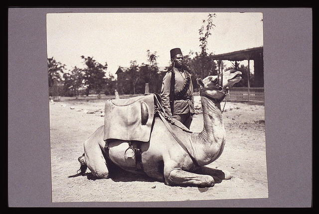 Anglo-Egyptian Sudan - camel soldier of the native forces of the British army