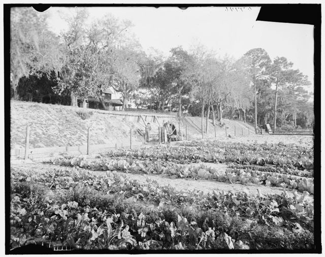 [Artesian well pumping water for home and irrigation, Ormond, Fla.]
