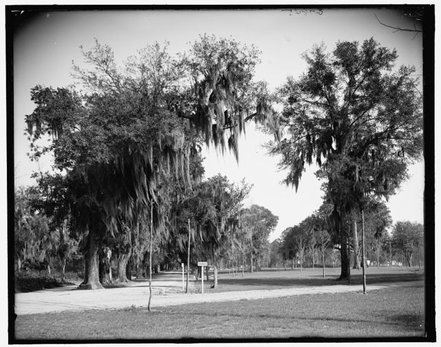 [Avenue of oaks, Bonaventure Cemetery, Savannah, Ga.]