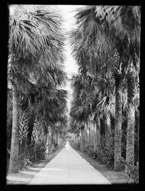 [Avenue of palms, Palm Beach, Fla.]
