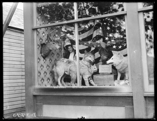 Bank window display of stuffed animals captured by Jim Dahlman, Bridgeport, Morrill County, Nebraska