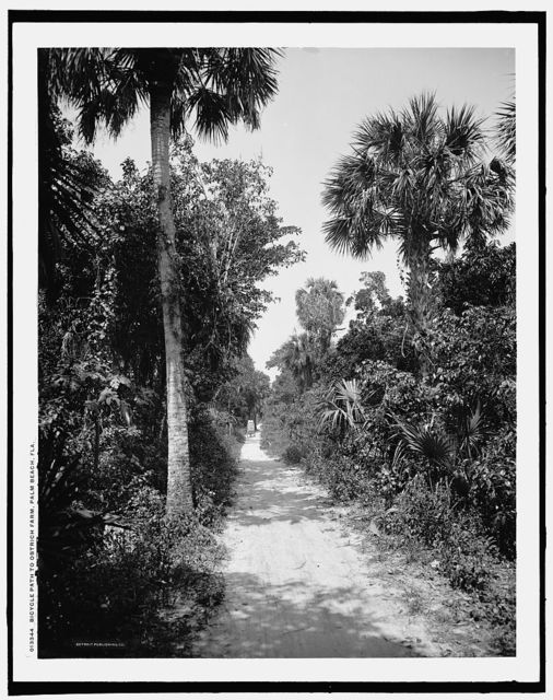 Bicycle path to ostrich farm, Palm Beach, Fla.