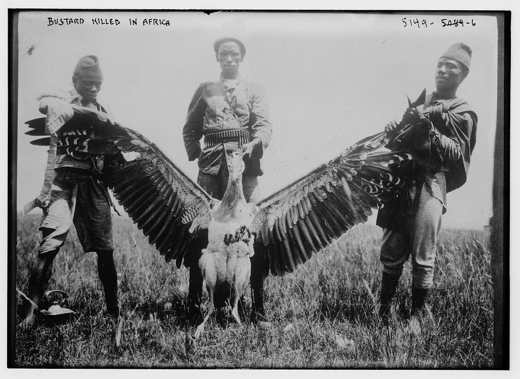характеристик маневрирования фото птерозавра с охотниками нашей статье