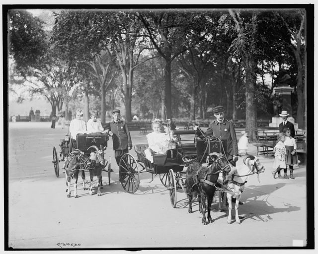 [Central Park, goat carriages in the park, New York, N.Y.]