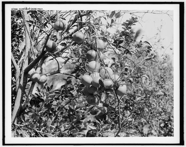 Cluster of grape fruit