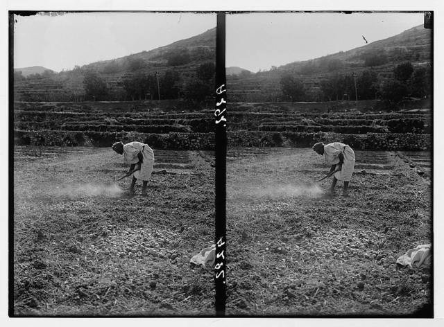 Costumes, characters, etc. Labourer in the field
