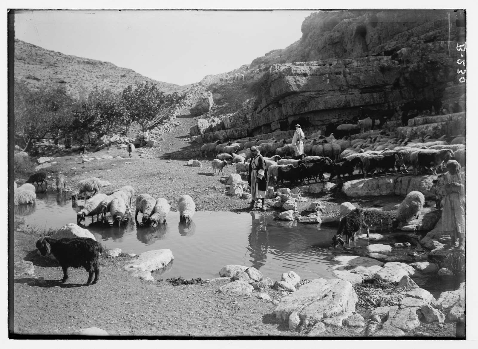 Costumes, characters, etc. Shepherd resting with flock at Ain Farah