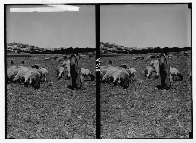 Costumes, characters, etc. Shepherd with flock in the Shepherds' Field