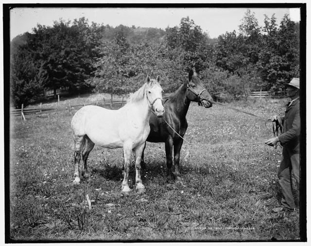 [D.C. Cook's horses, Lake George]