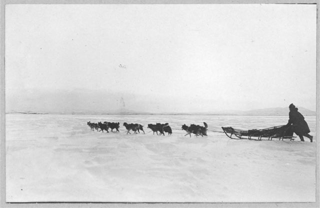 Dogsled crossing bay on Thanksgiving Day
