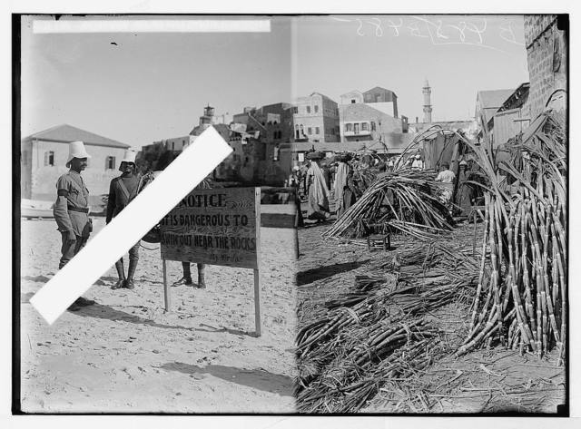 Economic plants. Sugarcane (Saccharum officinarum L.); [police standing near sign on beach, Jaffa?]