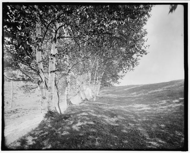 [Ethan Allen Farm, the road under the birches, Burlington, Vt.]