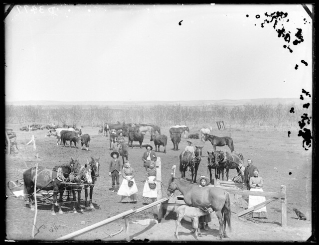Family with horses and cattle on the farm of C. Layton, on Cliff Table west of  Broken Bow, Custer County, Nebraska