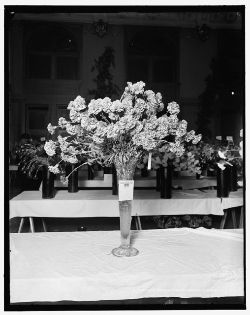 [First prize, class N. for Lawson Medal, American Carnation Society Exhibition, Detroit, Mich.]