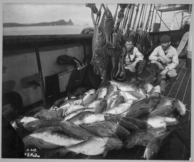 Fishing boat, cod and halibut / W. B. Miller.