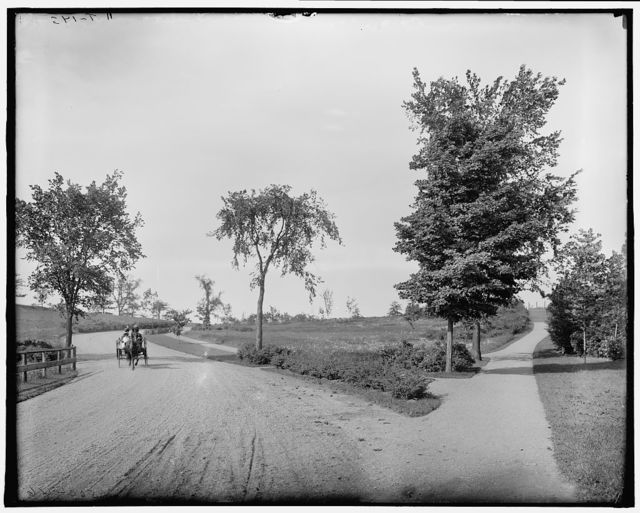 [Fresh Pond Drive, Cambridge, Mass.]
