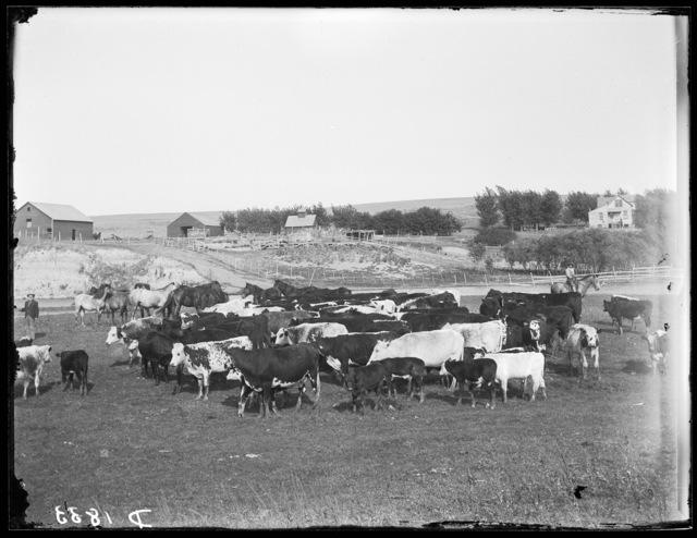 F.W. King, Wood Lake, Cherry County, Nebraska.
