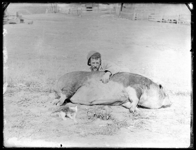 """""""Grover,"""" a champion hog owned by Dorsey, who raised thoroughbred Poland China hogs.  Goshen Valley, Holt County, Nebraska."""