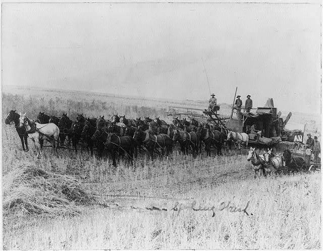 Harvesting machine pulled by 32 horses in Spokane, Washington
