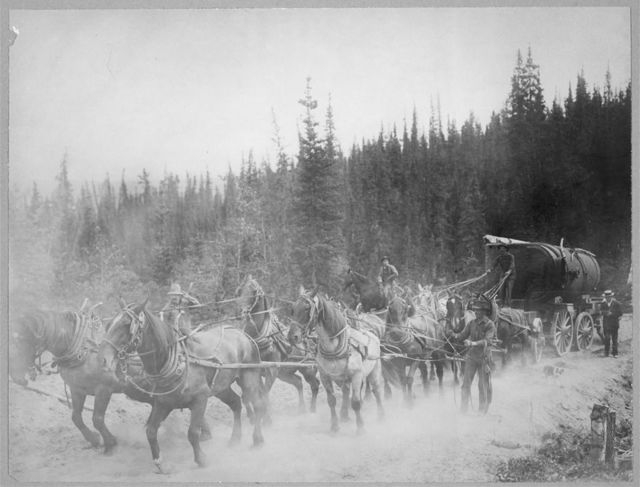 Horse team on the Overland Trail