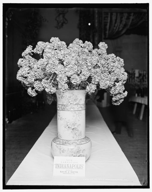 [Indianapolis carnation, American Carnation Society Exhibition, Detroit, Mich.]