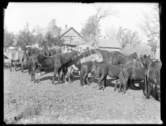John Good farm at Elsmere, Cherry County, Nebraska.