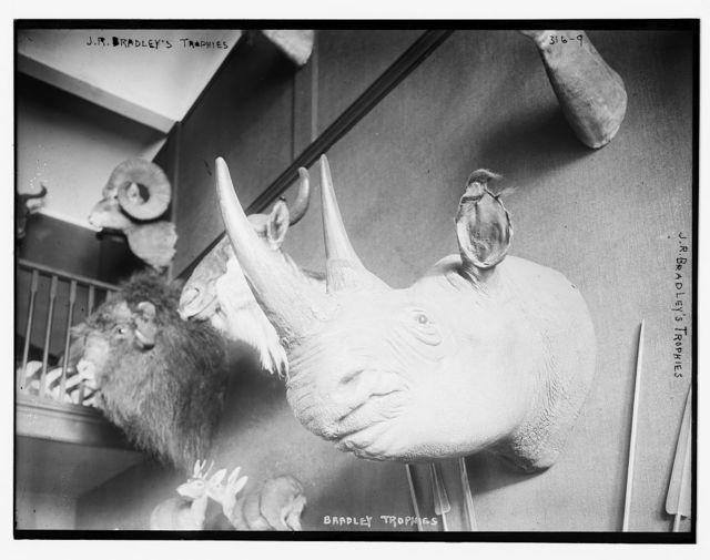J.R. Bradley's animal trophies (rhino)