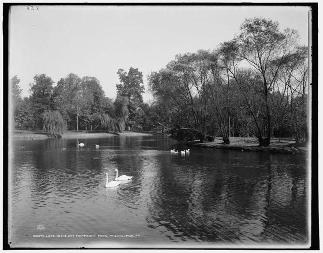 Lake in the zoo, Fairmount Park, Philadelphia, Pa.