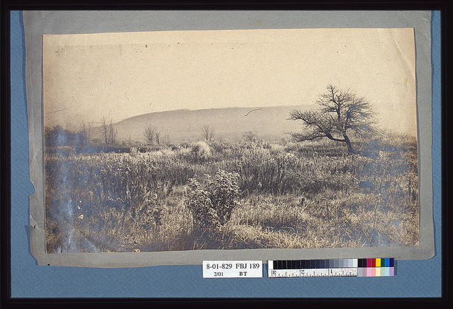 [Landscape of a field with hill in background]