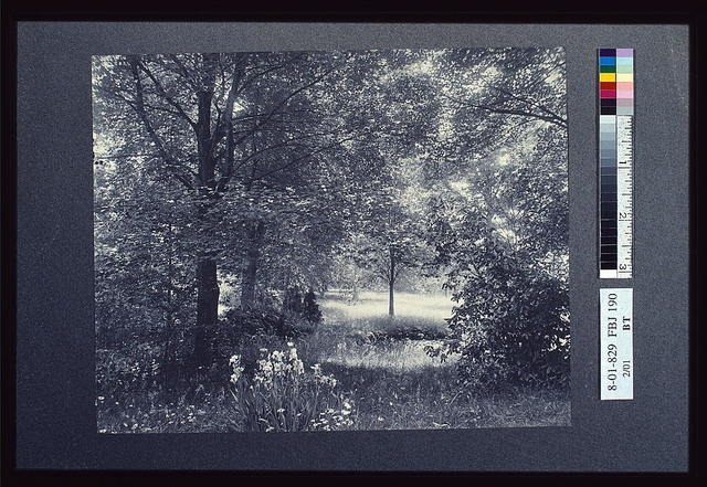 [Landscape of trees and meadow with irises in foreground]