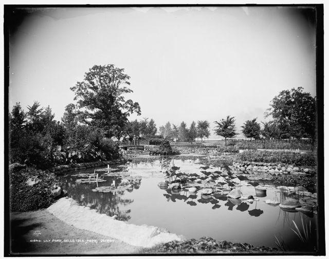 Lily Pond, Belle Isle Park, Detroit
