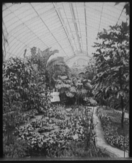 [Lily pond, Horticultural Building, Detroit, Mich.]